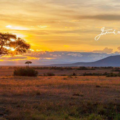 Heimweg-zum-Camp,-Way-home-to-the-camp-Masai-Mara-Kenia- Wildlife  & Nature